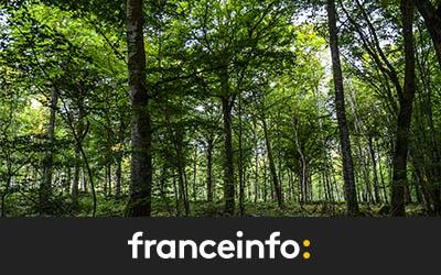 Et si vous deveniez propriétaire d'un arbre en pleine forêt ?