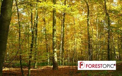Le label Bas-Carbone ouvre un boulevard pour valoriser le rôle climatique des forêts