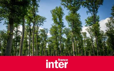 Le Livret A…rbre pour s'acheter un arbre dans la forêt