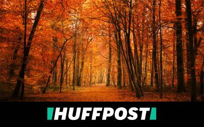 EcoTree vous permet d'épargner et de sauver des arbres en même temps