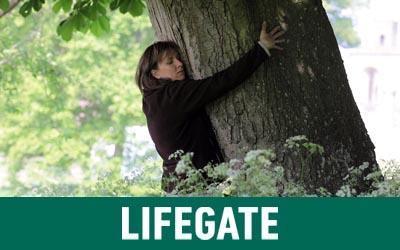 EcoTree, la startup che propone di investire piantando alberi