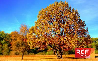 Devenir propriétaire d'un arbre, c'est possible