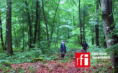Etre propriétaire d'un arbre: la start-up française EcoTree