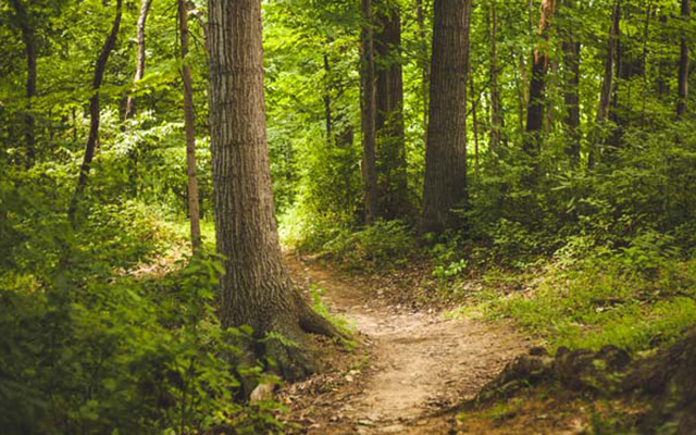 Ett foto av Malicorne sur Sarthe skogen