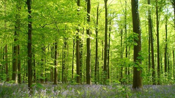 Bourrus-skoven