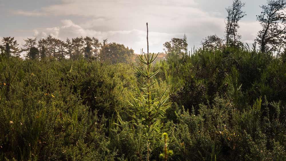 Coadou Forest