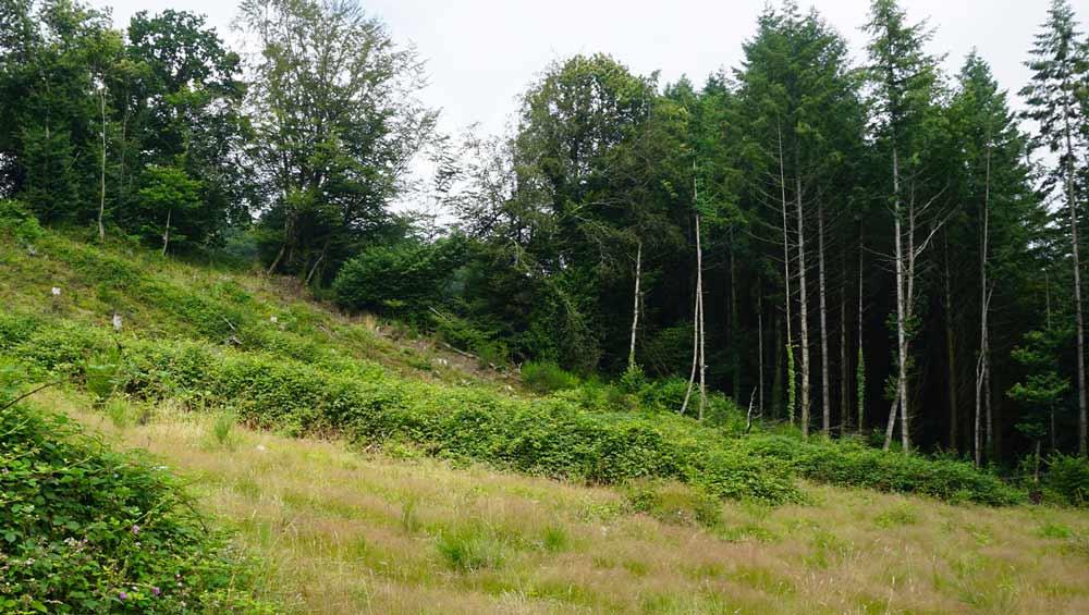 Mariaker Forest
