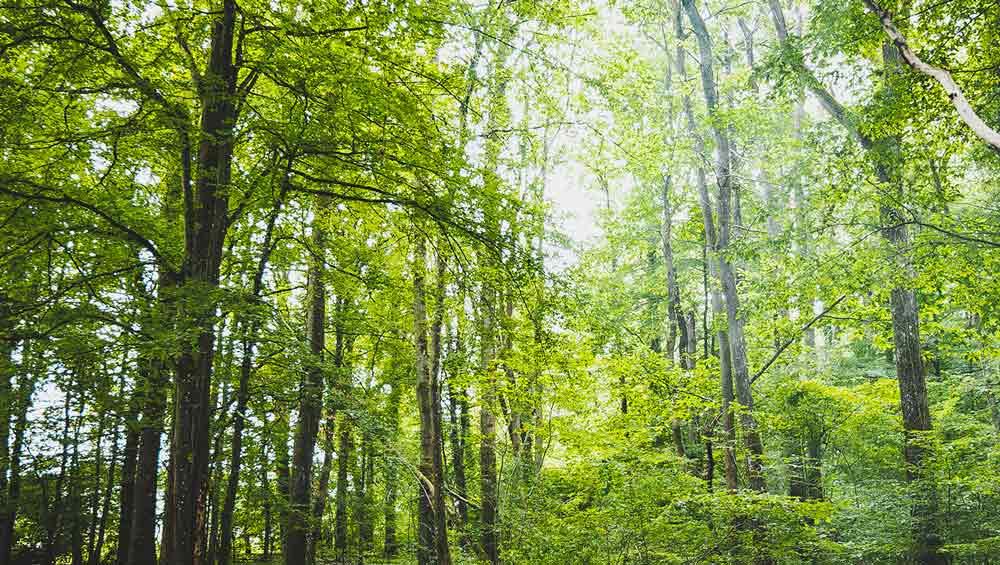Pézarches Forest