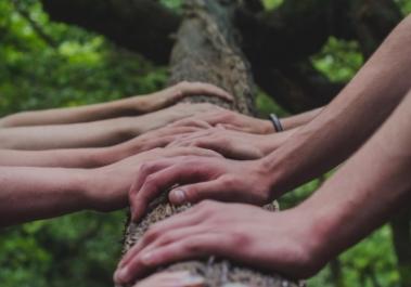 composition du bois